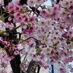 春光日々新(しゅんこうひびあらた)
